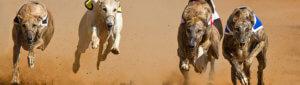 WS PP 780X220 Greyhound (002)
