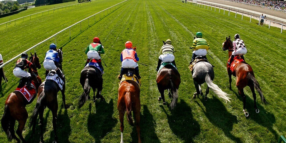 Yankee Bet Guide I Detailed Explanation & Examples